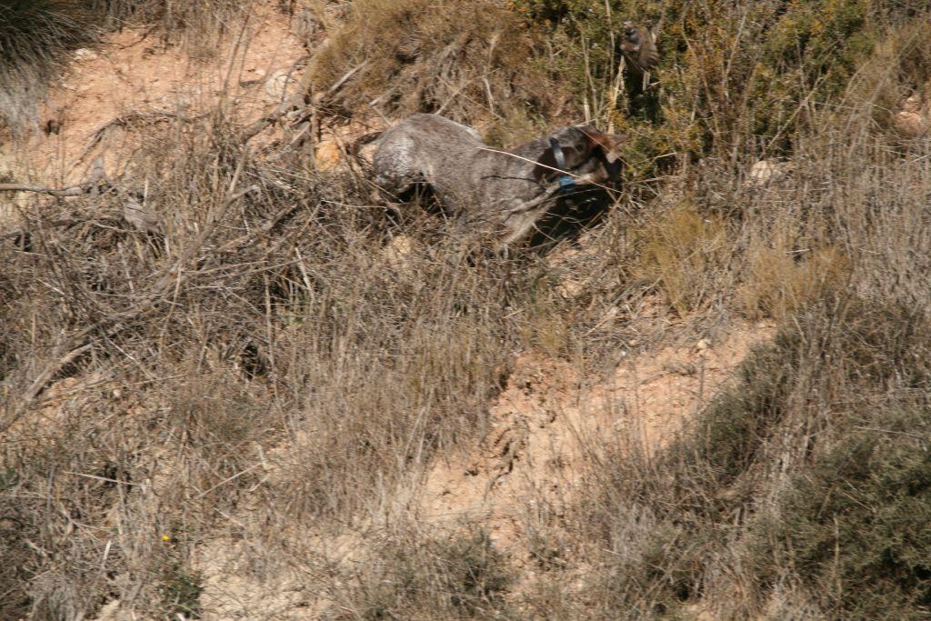 Caza de perdiz salvaje, liebres y conejos
