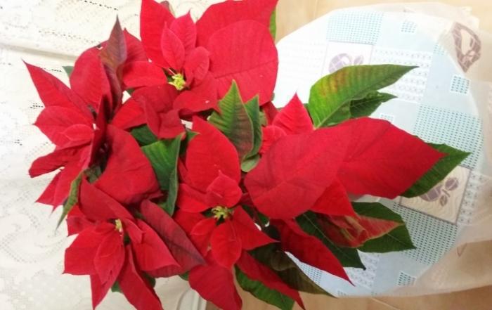 Feliz Navidad y próspero año nuevo 2015