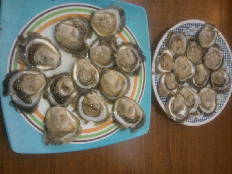 Reajustado_Dos ocenas de ostras